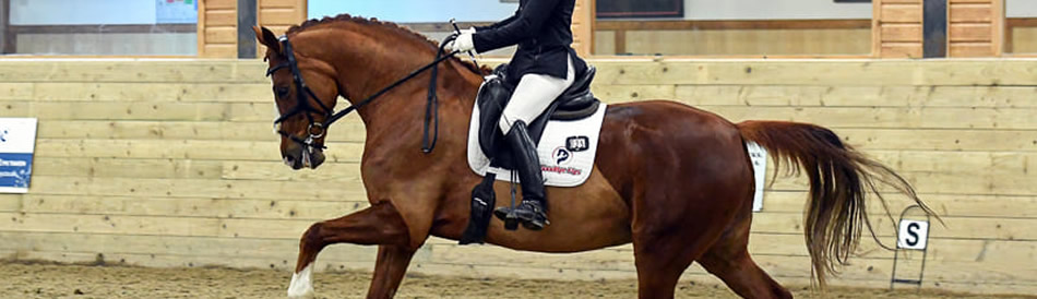 British Dressage & Unaffiliated Dressage